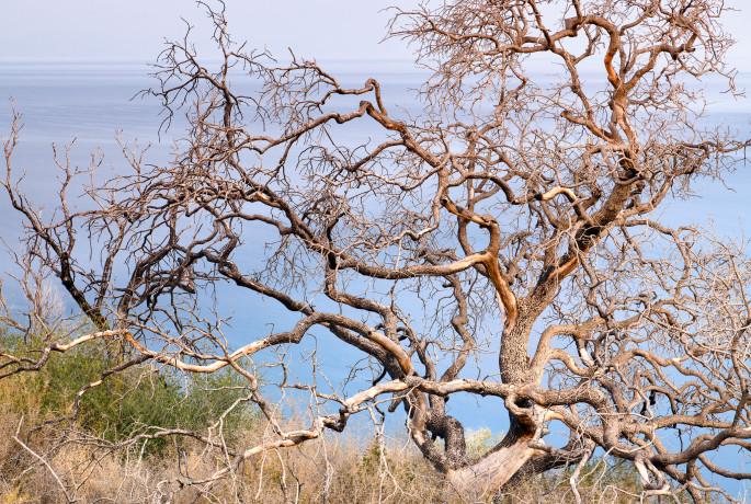 Dead tree, Mani